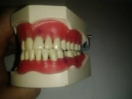 Teeth - columbia/endo