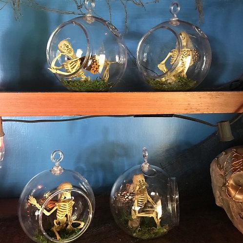 Dead Fairies Curiosity Display