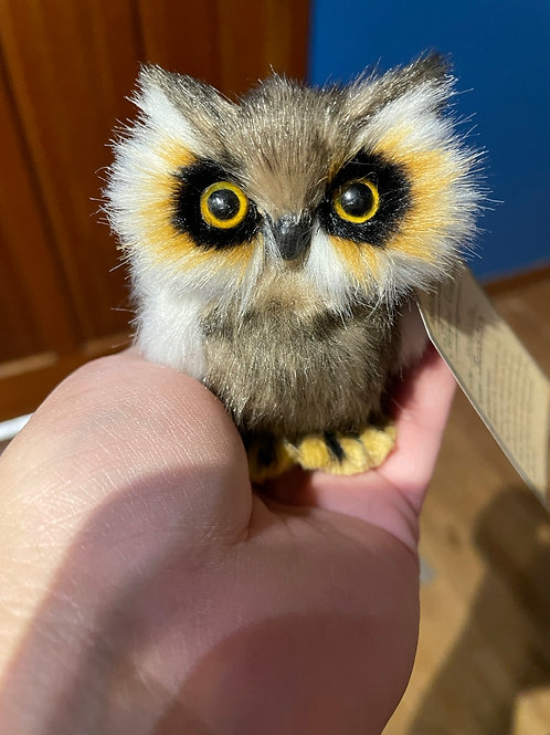 Baby owl shoulder pet