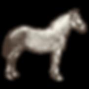 Criollo horse