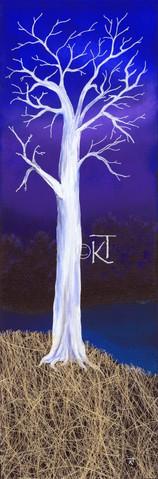 Moon Tree Hill