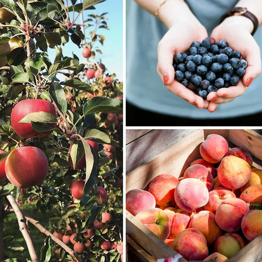 Peach, Apple & Blueberry Pick-Your-Own Trio! 9/3