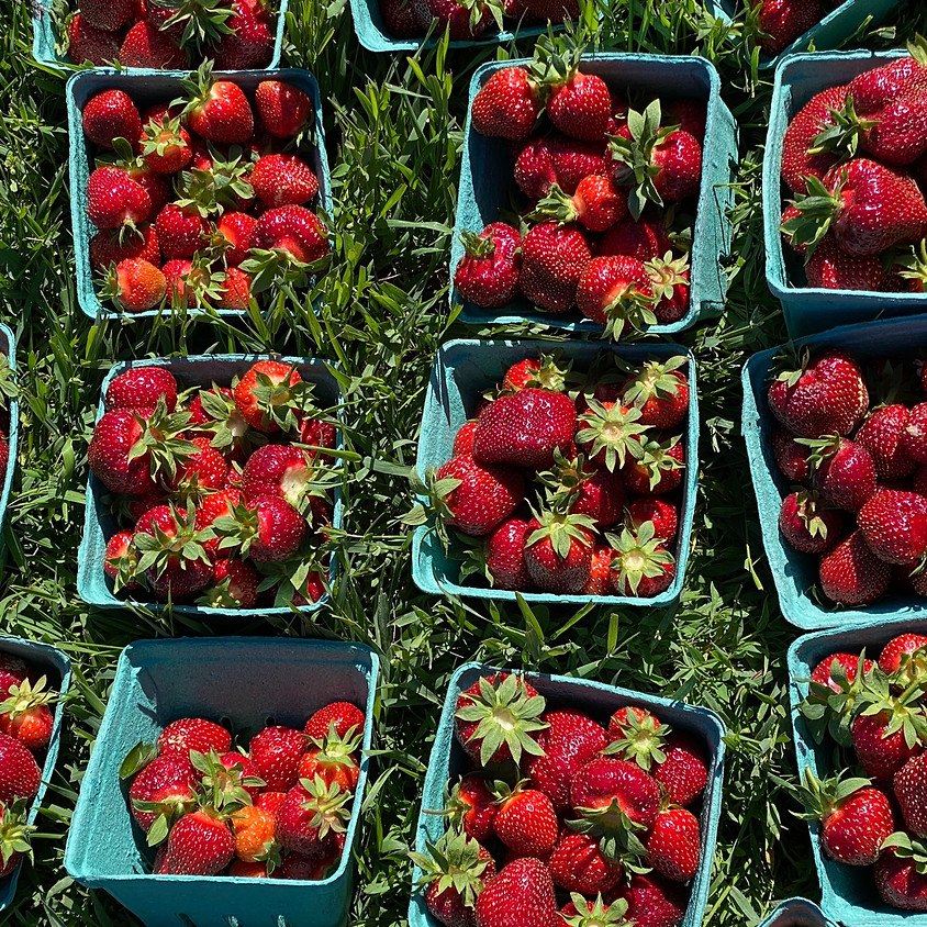 Pick Your Own Strawberries 6/23