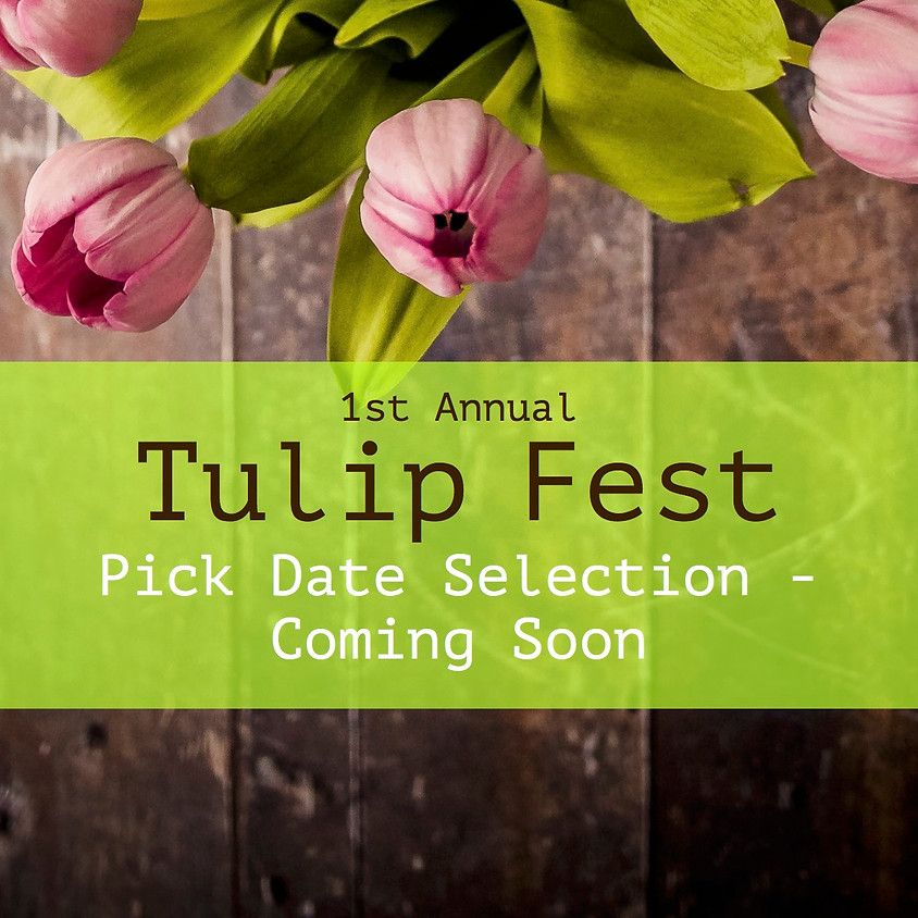 Tulip Fest: Pick Date