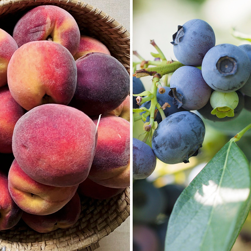 Pick-Your-Own Duo! Peaches + Blueberries 8/25