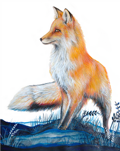 Print of Canadian Fox