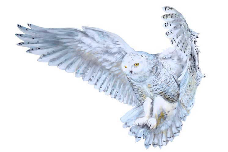 Print of Watercolor Snowy Owl