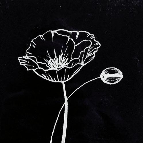 Poppy Doodles