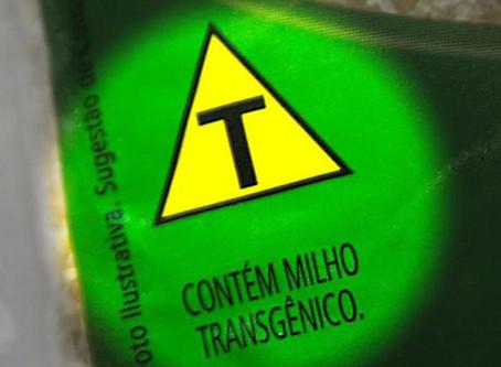 Você sabe o que são alimentos transgênicos?