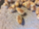 Baby Chicks.png