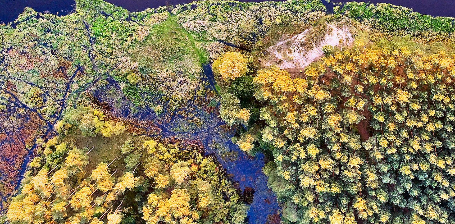 Boreal forest, stream and river