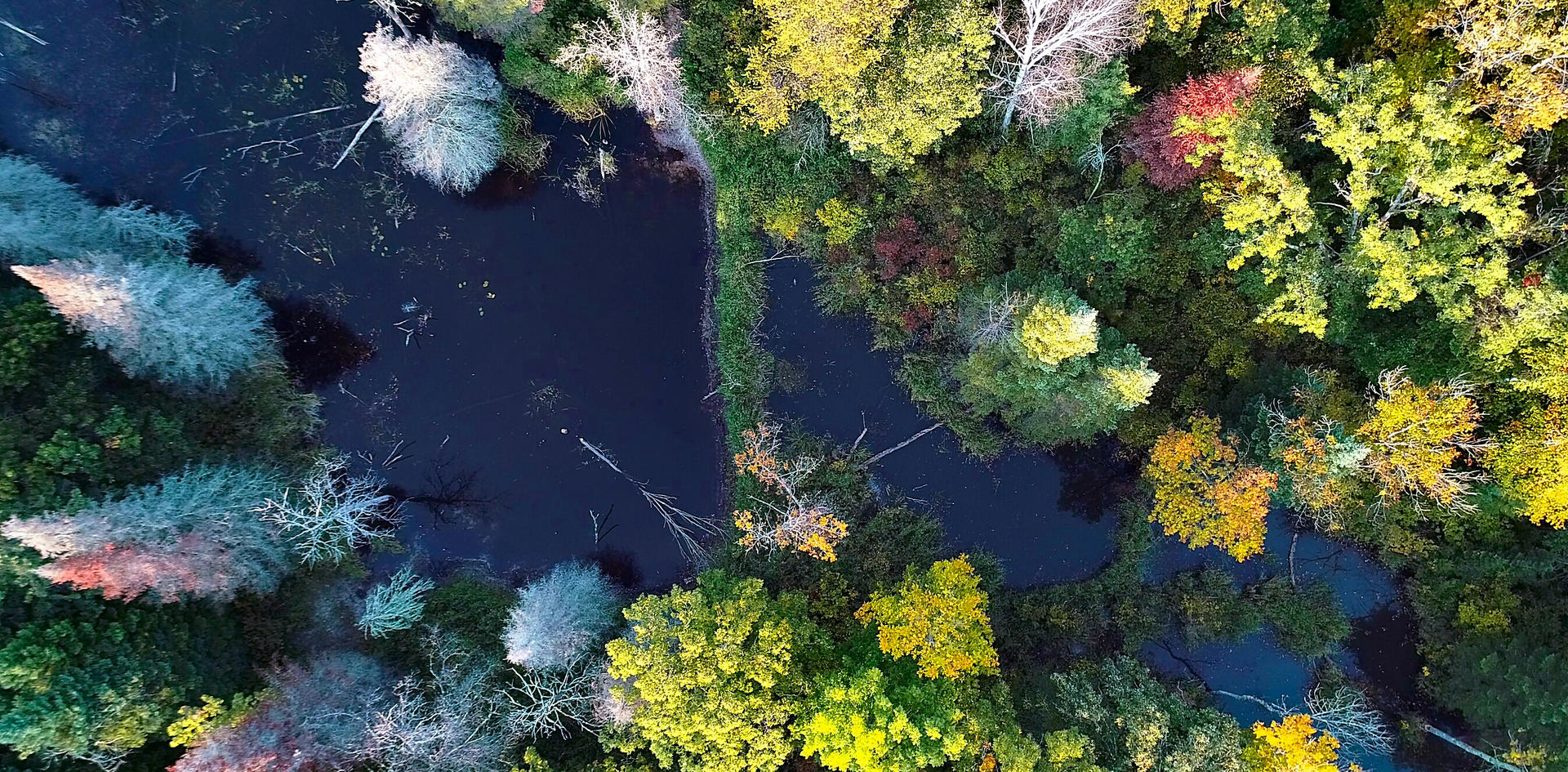 Forest wetland and beaver dam