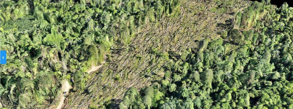 Forest blowdown