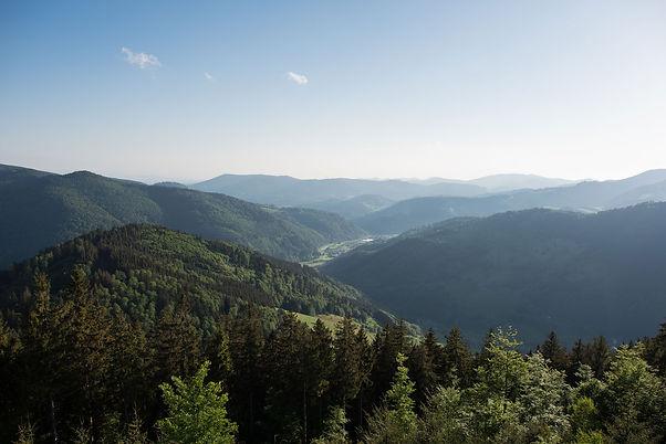 Fuxx-Spirits-Schwarzwald.jpg