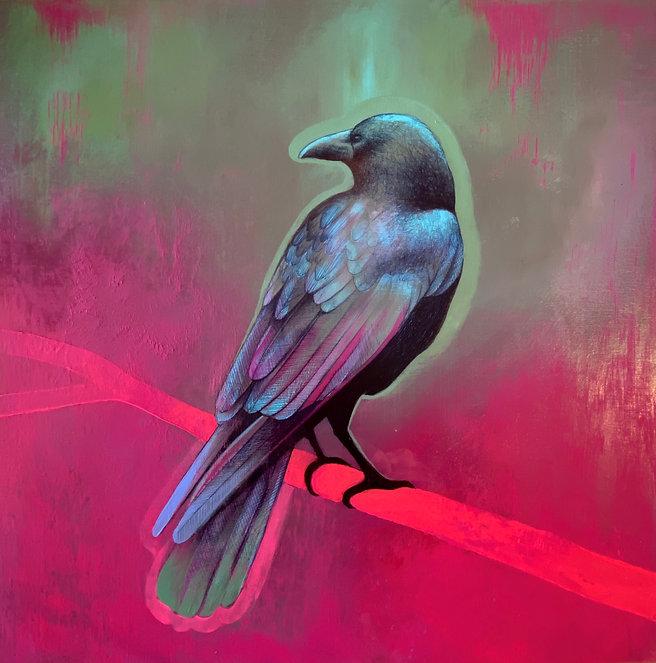 bird bird bird bird bird.jpg