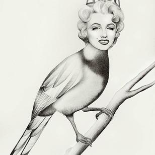 Marylin The Bird
