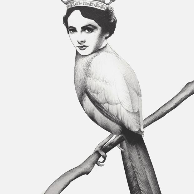 Elizabeth The Bird