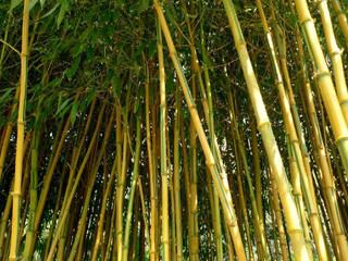 Bambu como substituto do aço, entenda