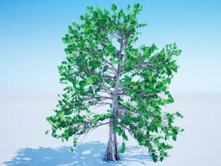 Árvores têm potencial para serem geradoras de eletricidade para nossas cidades