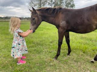 2019 smokey buckskin colt aqha quarter h