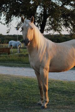 Jac-Dun-Whizd-By-It-dunalino-stallion-pa