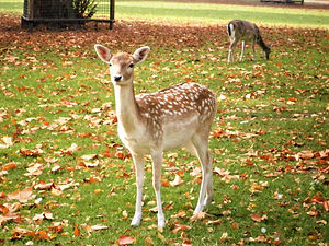 Animal park, deer, maastricht, netherlands