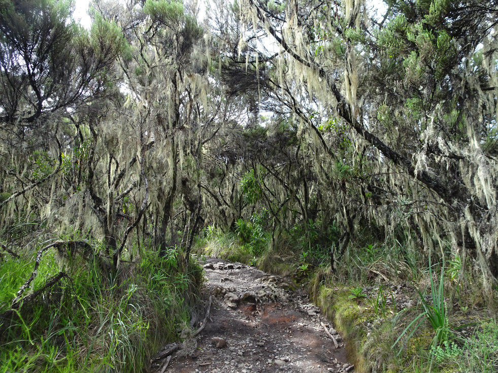 The moss returns