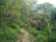 hong kong, trail, mountain, hiking, view, lung mun
