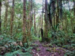kokoda, track, trail, papua new guinea, hike, trek, mountain, jungle