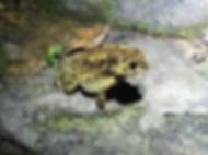 hong kong, trail, view, mountain, maclehose, hiking, frog