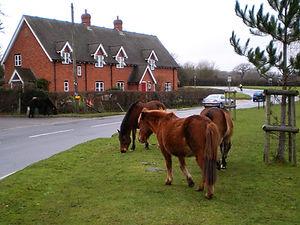 Ponies, Beaulieu, England
