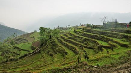 Final rice terraces