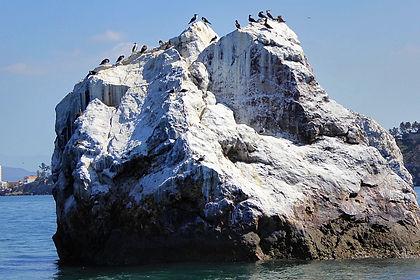 mazatlan mexico bird island