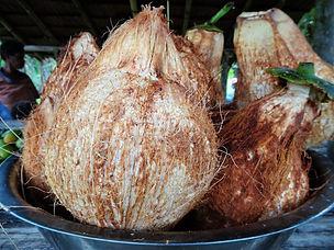 kokoda trail, kokoda track, papua new guinea, jungle, hike, trek, coconut, market