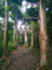 hong kong, trail, mountain, hiking, view, lung mun