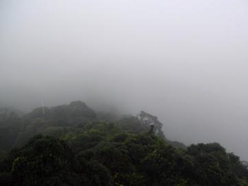 Gunung Brinchang Trek