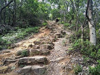 lantau island, lantau trail, hiking, mountains, view, stairs, forest, hong kong