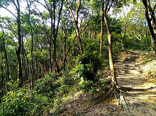 wilson trail, hong kong, hiking, mountains, forest