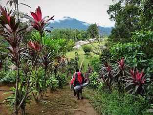 kokoda trail, track, papua new guinea, mountain, jungle, trek, hike