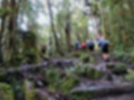 kokoda, track, trail, papua new guinea, hike, trek, mountain, jungle, moss forest