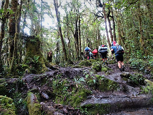 kokoda, track, trail, papua new guinea, hike, trek, mountain, jungle, moss forest