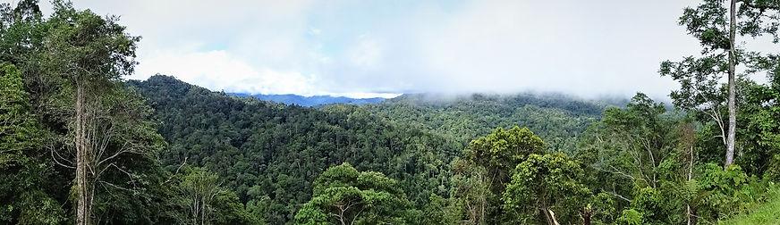 kokoda trail, track, papua new guinea, hike, trek, mountain, jungle, view
