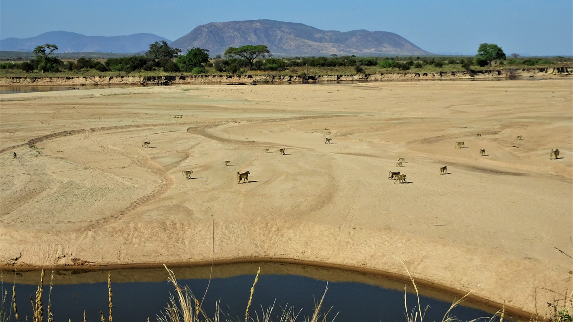 The great baboon migration