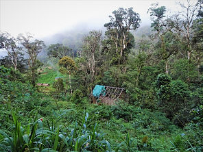 kokoda, track, trail, papua new guinea, hike, trek, mountain, jungle
