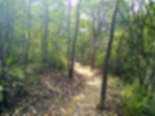 hong kong, trail, mountain, hiking, view, tai lam