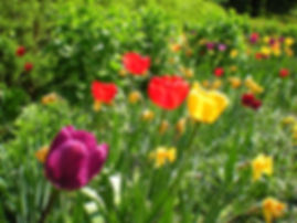 lauterbrunnen, switzerland, alps, flowers