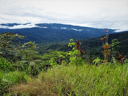 kokoda trail, track, papua new guinea, hike, trek, mountain, jungle, view, nauro