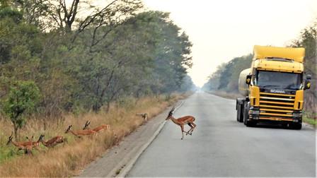 Impala vs truck