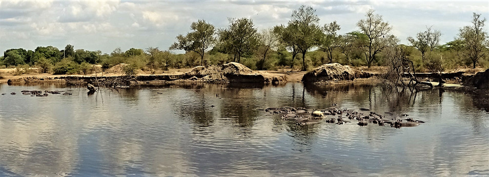 Lunch beside the hippo pool