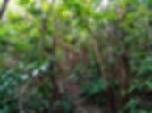 lamma island, hong kong, hiking, hike, mountains, scenery, forest, nature